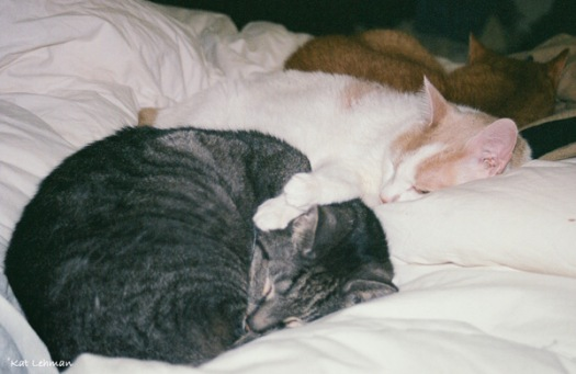 These were two of our most beloved cats. Toby was 22 when he passed away and Chelsea was 14.