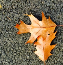 leaves in the fall on macadam