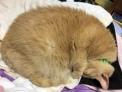 Oskar the cat