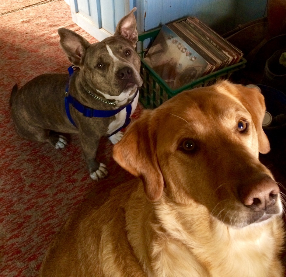 Grace and Sadie the dogs