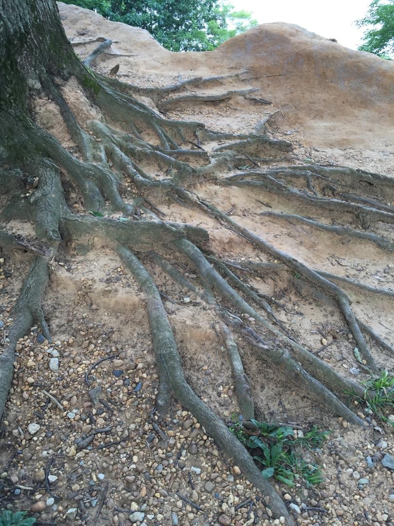 Erosion at Elk Neck State Park
