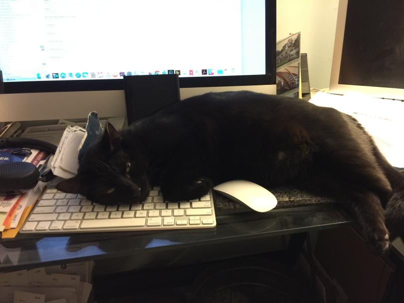 Jet, a black cat, lying on a keyboard