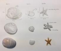2 shells and a starfish