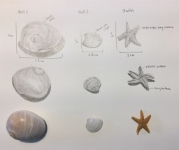 2 shells and a starfish
