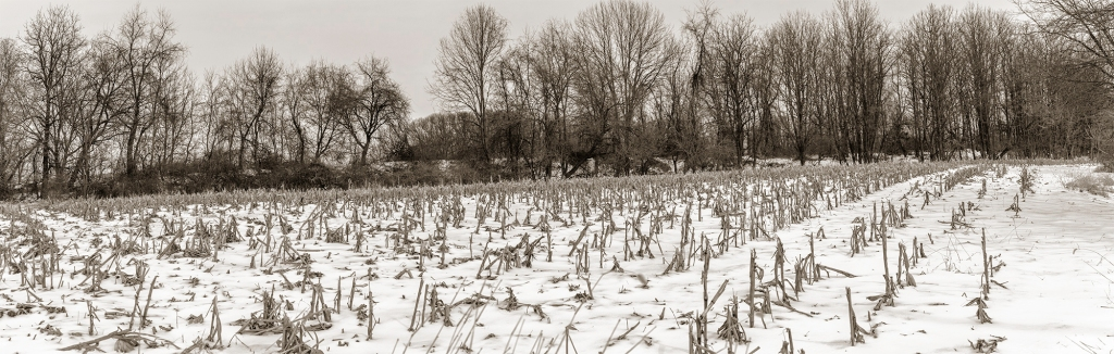 Center Valley cornfield HDR Black and White Photo