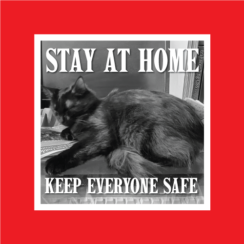 COVID-19 Social Media post stating Stay at Home, Keep Everyone Safe featuring a cat in front of a computer monitor.